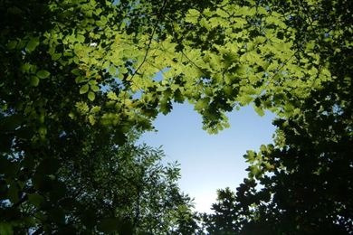 ref.: 1041 - terreno em jandira, no bairro forest hills