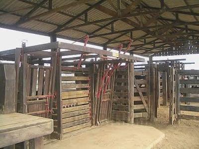 ref.: 173 - fazenda em colniza para venda - v173