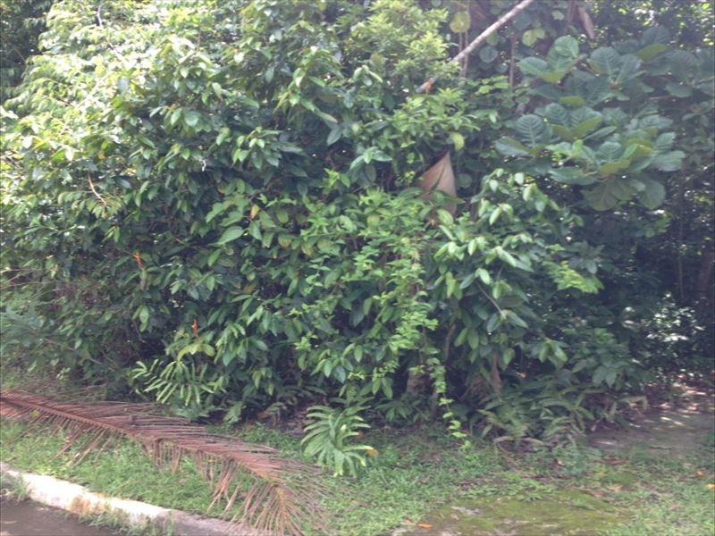 ref.: 214 - casa condomínio fechado em bertioga, no bairro guaratuba costa do sol - 3 dormitórios