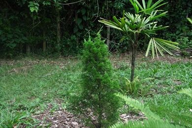 ref.: 2534 - terreno em cotia, no bairro chácara do peroba