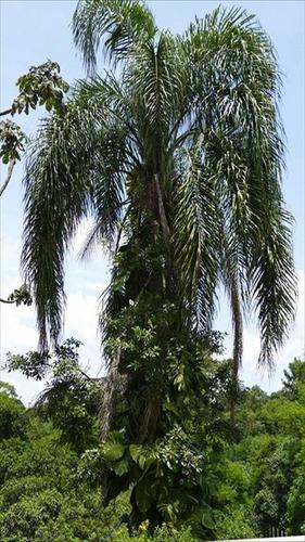 ref.: 2772 - terreno em carapicuiba, no bairro parque primavera
