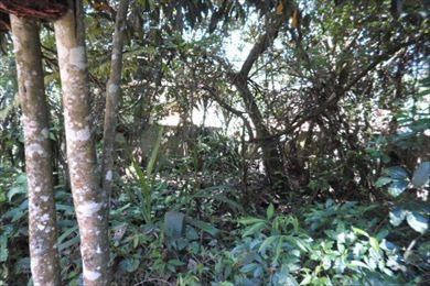 ref.: 3102 - terreno em cotia, no bairro dom henrique