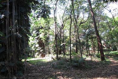 ref.: 4256 - terreno em sao paulo, no bairro morumbi