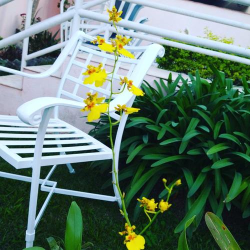 reforma espreguiçadeiras cadeiras