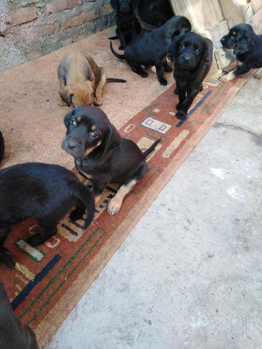 regalo cachorritos