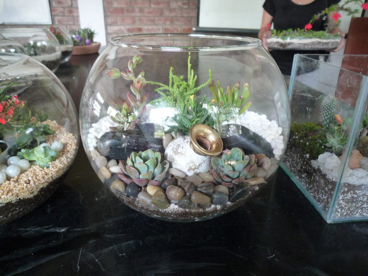 Regalo ecol gico terrarios de plantas suculentas y for Curso cactus y suculentas