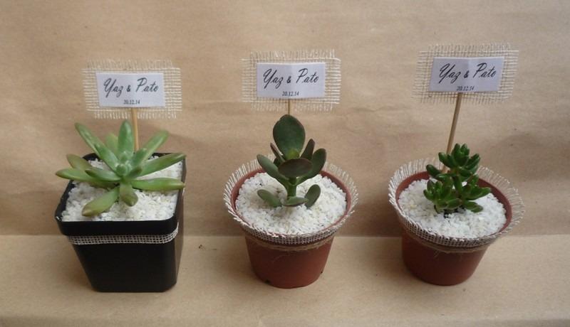 Regalo ecol gico terrarios de plantas suculentas y - Regalo muebles usados ...