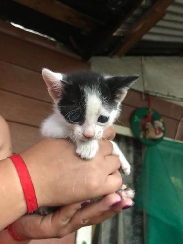 regalo gatitos