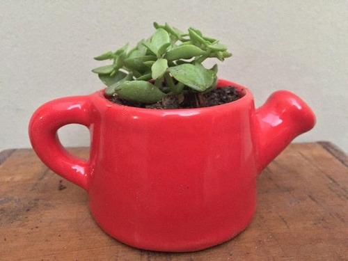 regalo mini jardin plantas suculentas y cactus
