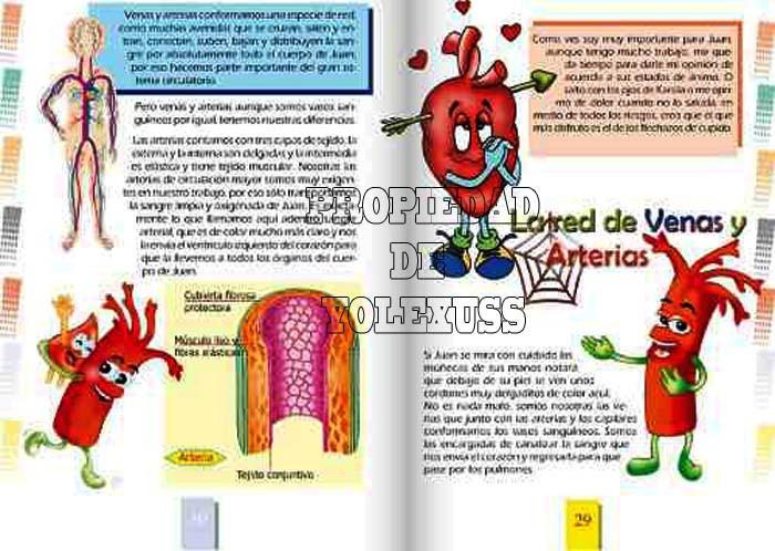 Regalo Navidad El Cuerpo De Juan Anatomia Humana Para Niños - S/ 84 ...