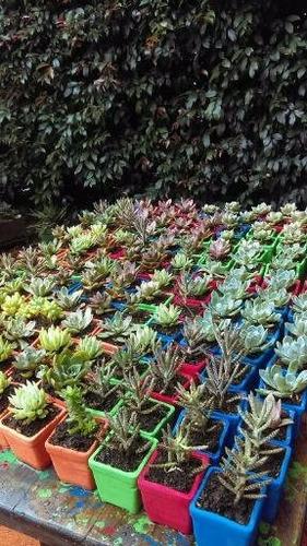 regalos, recordatorios detalles,  plantas suculentas