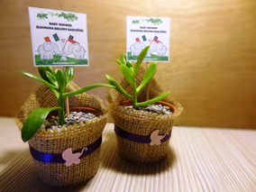Recuerdos De Bautizo Con Cactus.Regalos Recuerdos Bautizos Cactus Suculentas Encintados
