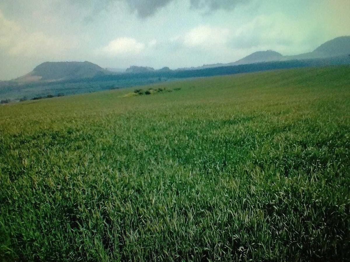 remato!  16 hectáreas de terreno