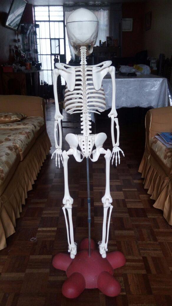 Remato Colección Cuerpo Humano - Esqueleto Humano Y Organos - S/ 700 ...