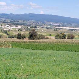 remato hectárea de terreno en el paraje denominado los abed