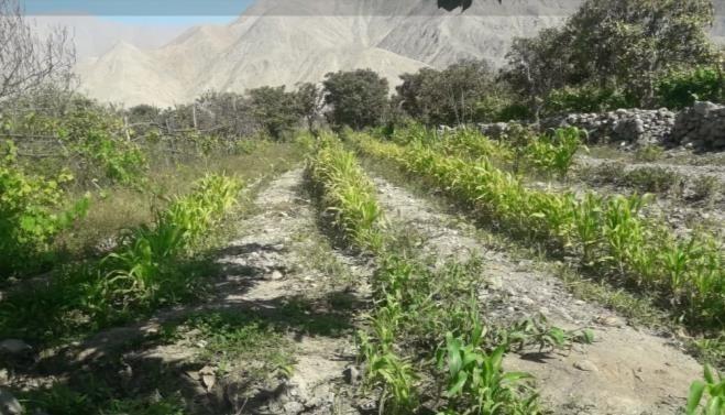 remato terreno en lunahuana
