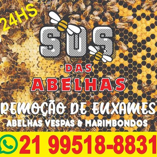 remoção de enxames de abelhas vespas e marimbondos