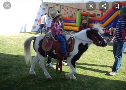 renta de ponis para fiestas infantiles