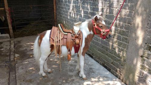 renta de ponys