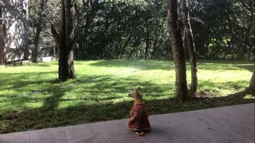 renta jardin para fiestas y eventos en condado de sayavedra