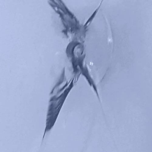 reparacion parabrisas zona norte estrella ojo buey garantía