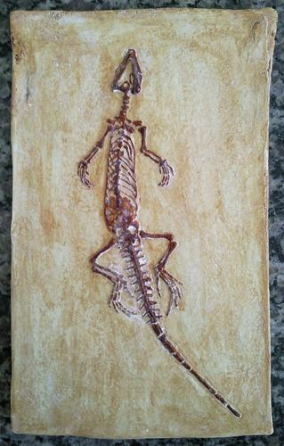 réplica de fóssil escala 1:1 lagarto primitivo ( leptosauro)