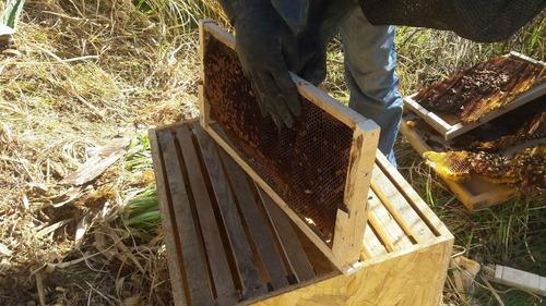 rescate de abejas cuenca  ecuador, apicultores
