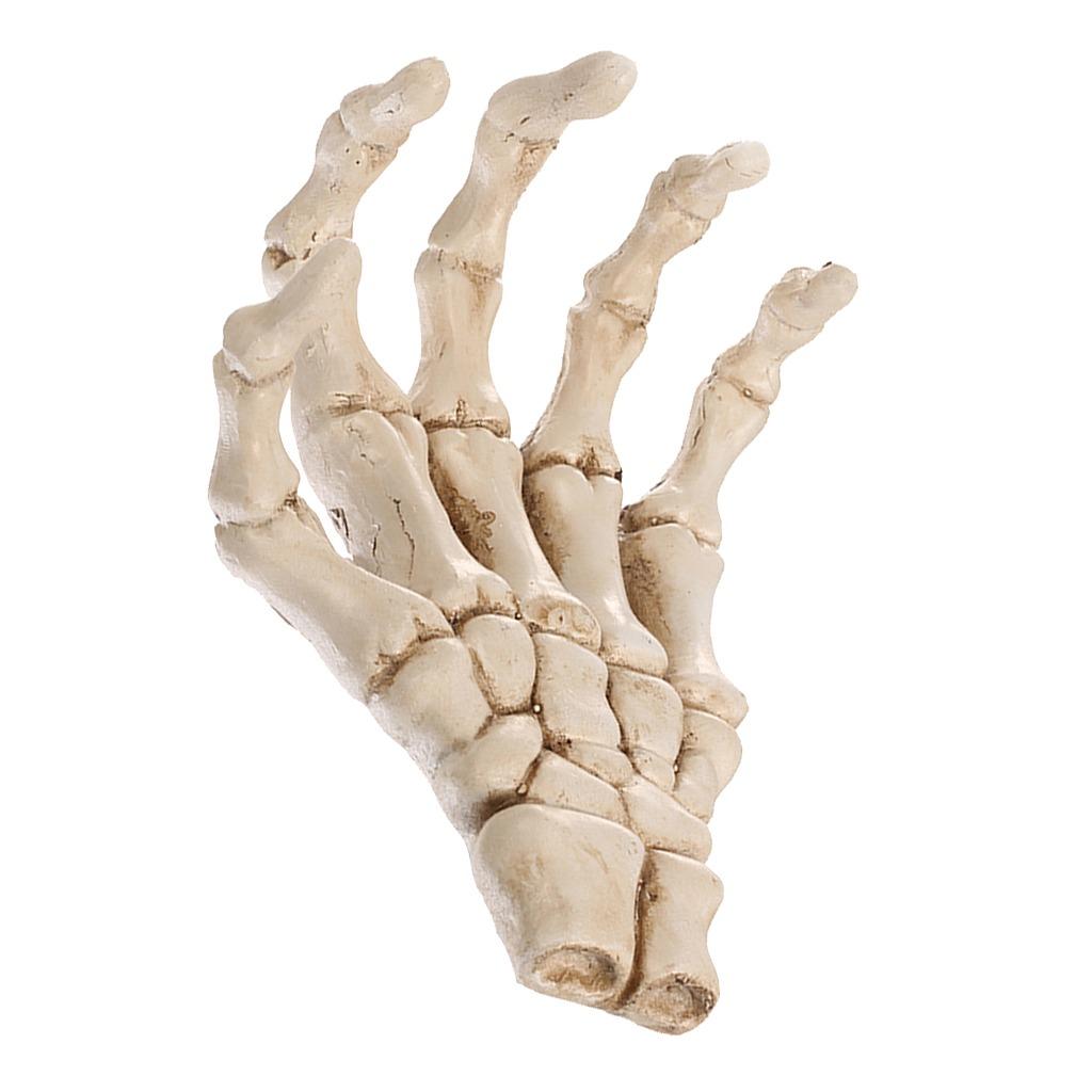 Resina Palma De Mano Cráneo De Esqueleto Médico Réplica M - $ 585.90 ...