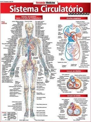 Resumao Medicina - Sistema Circulatorio Avançado - R$ 9,89