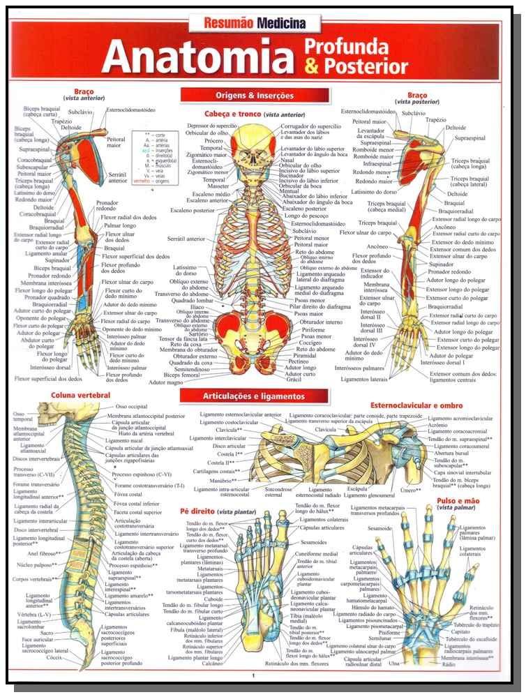 Resumão Medicina - Anatomia Profunda E Posterior - R$ 14,48 em ...