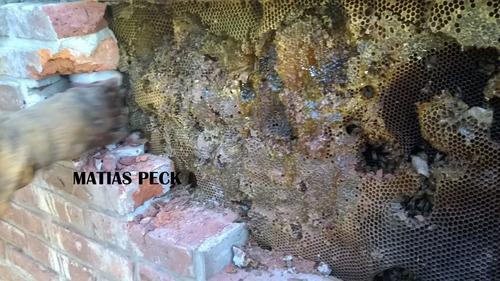 retiro abejas enjambres zona norte oeste sur  y caba