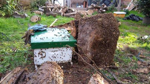 retiro de abejas (enjambres)