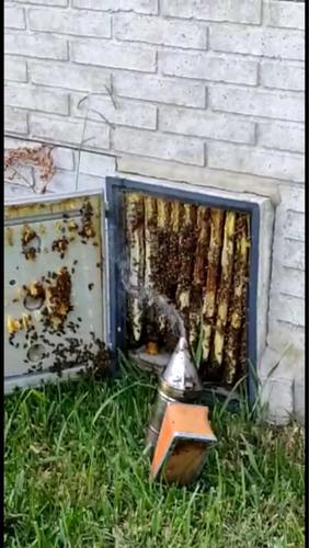 retiro de abejas, enjambres, avispas zona caba soy apicultor