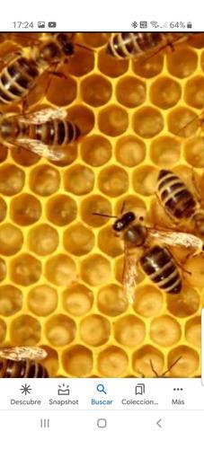 retiro de enjambres de abejas zona oeste
