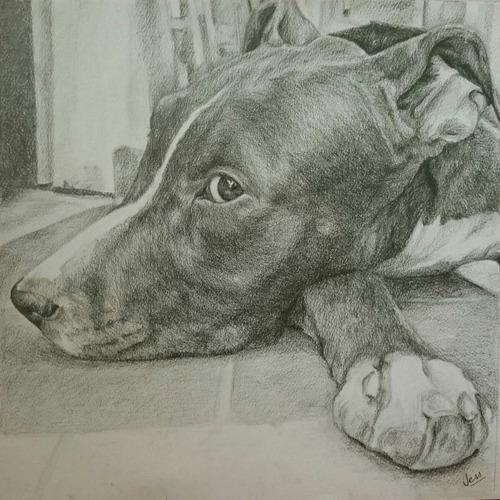 retrato dibujo lápiz color a3 de personas mascota perro gato