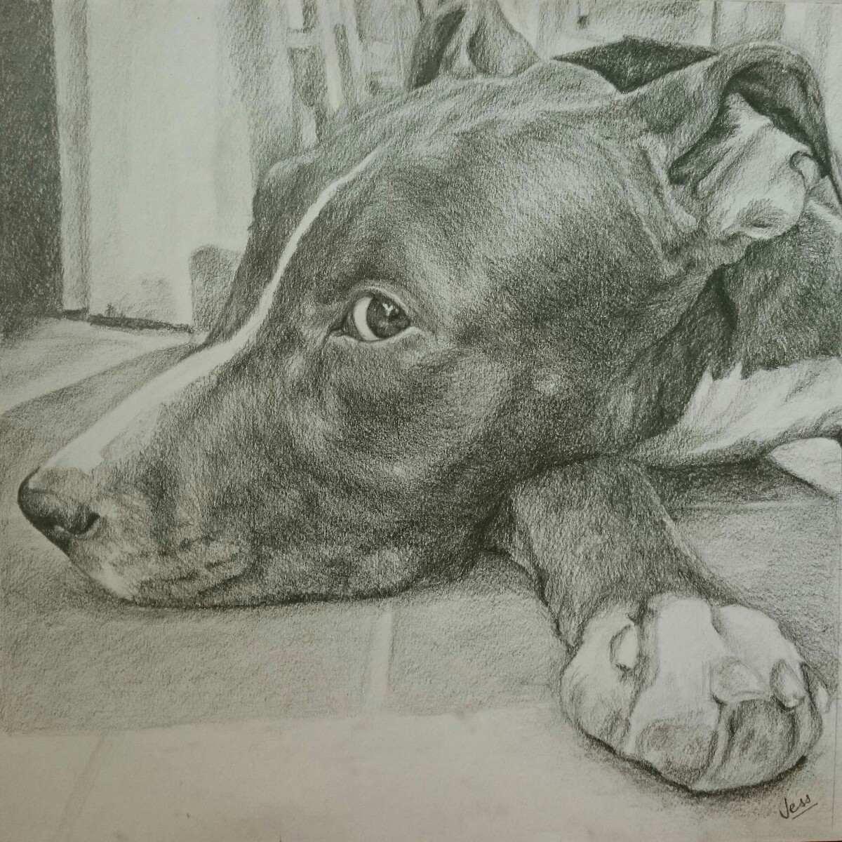 Retratos Dibujos A Lápiz De Perrosgatosanimales 105000 En