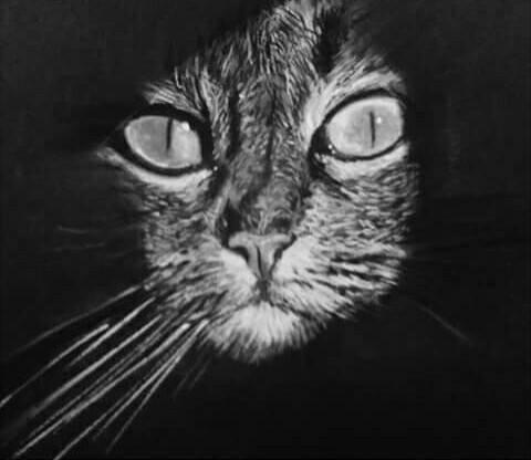 Retratos Y Dibujos De Animales En Lápiz 60000 En Mercado Libre