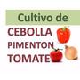 Aprende Técnicas Cultivo Pimentón Cebolla Tomate + Corrida