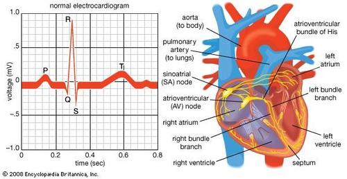 riesgo pre quirurgico electrocardiograma ecg cardiologico