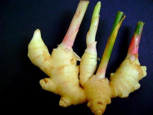 rizoma de gengibre meio kilo 32,00 confira