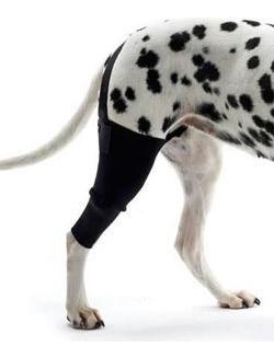 rodillera de neoprene para perros rodilla ortopedia canina