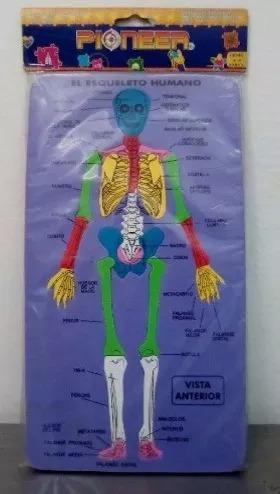 rompecabezas didáctico esqueleto-musculo en foami entrega ya