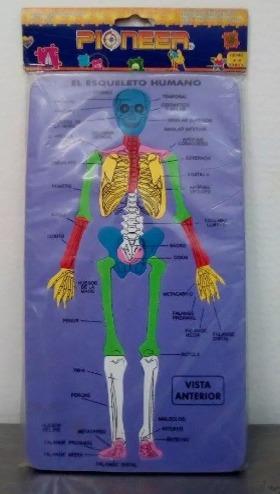 rompecabezas foami, didáctico esqueleto-musculo. entrega ya!