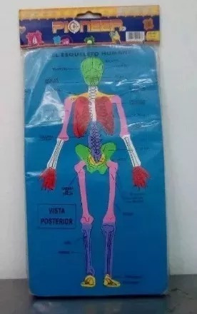 rompecabezas foami, didáctico esqueleto-musculo.  ya!!