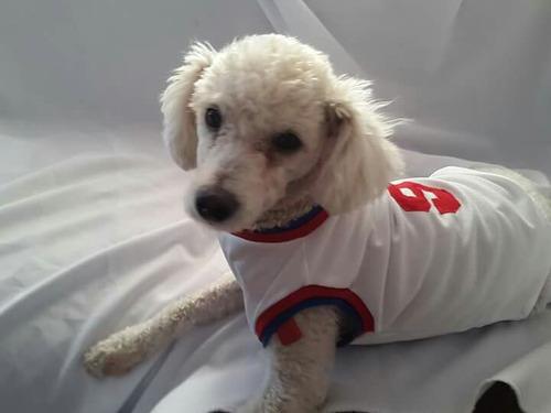 ropa para perro camiseta de nacional talle m