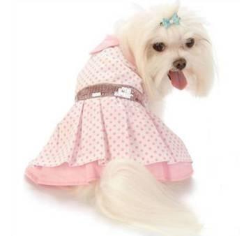 ropa para perros más!