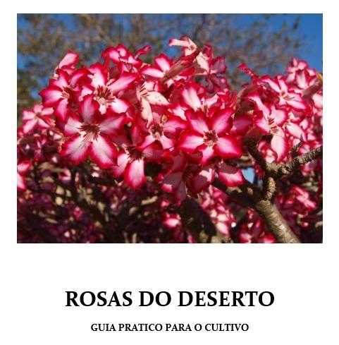 Rosa Do Deserto Como Cuidar De Mudas Sementes Adubos Flor R 29