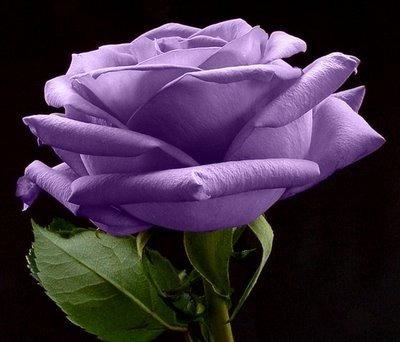 rosa lilas + amarelas + brancas + salmon + vermelha