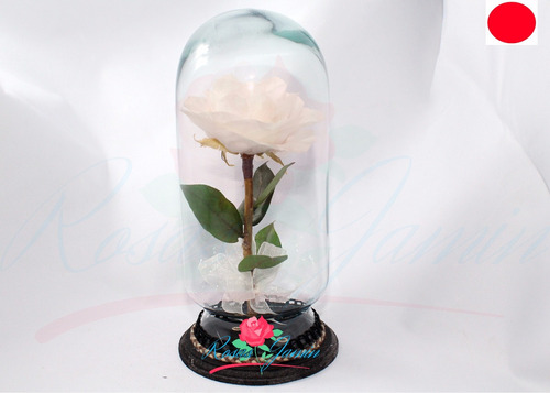 rosa rehidratada color blanca