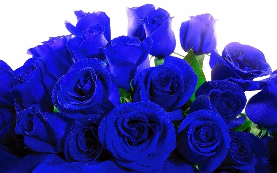 Rosas Azules Naturales S 6000 En Mercado Libre
